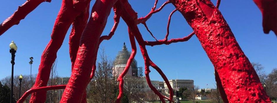 Client Steve Tobin has Exhibition in Washington D.C.